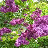 Spacer szlakiem liliaków w Ogrodzie Botanicznym